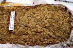 Messina, bloccato corriere con oltre 30 chili di marijuana: la droga avrebbe fruttato 60 mila euro