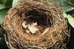 Gioiosa Marea, il parroco rimuove un nido di uccelli: scatta la denuncia delle associazioni ambientaliste