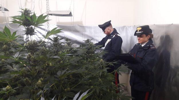 droga, mondello, piantagione indoor, Palermo, Cronaca
