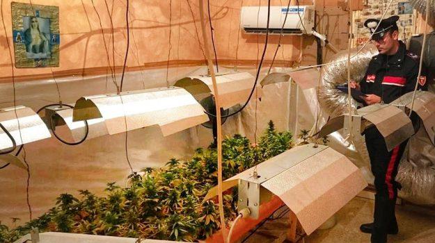 droga, marijuana, piantagione indoor, Paolo Filippone, Samuele Giuseppe Filippone, Palermo, Cronaca