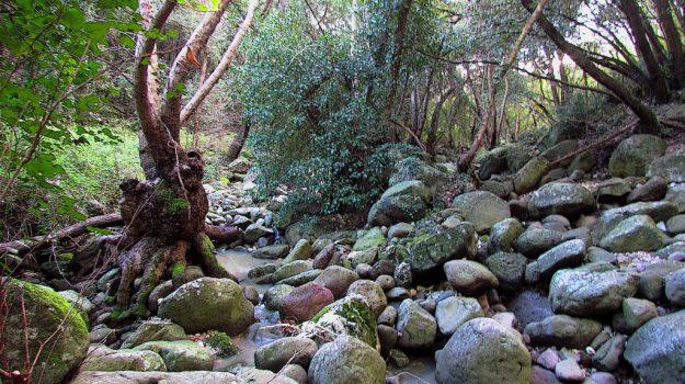 Coleottero, riserva naturale, villasmundo, Siracusa, Cultura
