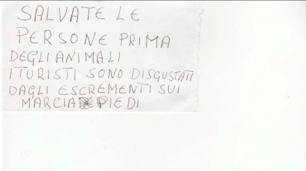 enpa, GATTI, lipari, Eleonora Zagami, Messina, Cronaca