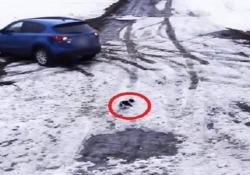 Cane salva il suo amico Chihuahua che sta per essere messo sotto da una macchina La incredibile scena è stata ripresa da una telecamera di sorveglianza nella città di Gaspé, in Canada - CorriereTV