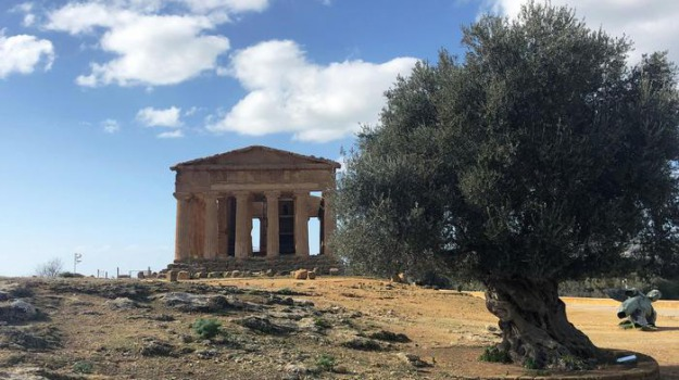 domus agrigentum, università, Valle dei Templi, Agrigento, Cultura