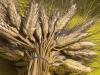 A San Cipirello la pizza si fa con i grani antichi: il video della manifestazione