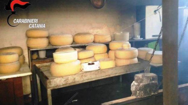 carabinieri, formaggi, Pedara, Catania, Cronaca