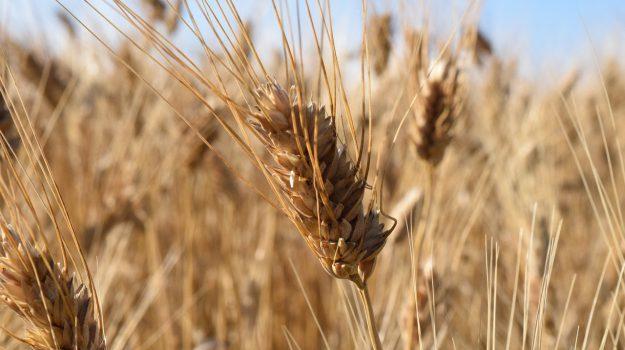 alimentazione, pane di grano duro, università di catania, Catania, Mangiare e bere