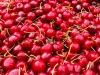 Il maltempo distrugge le ciliegie, dimezzata la raccolta (fonte: Pixabay)