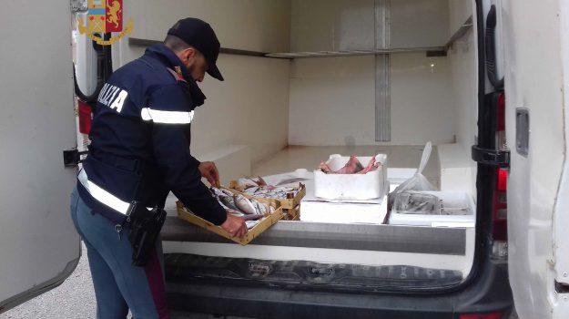 patti, pesce sequestrato, polizia, Messina, Cronaca