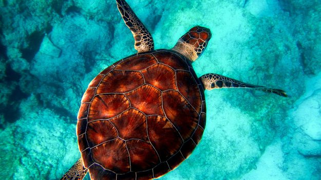Eolie, al via un progetto per il soccorso delle tartarughe: lezioni anche per i bimbi