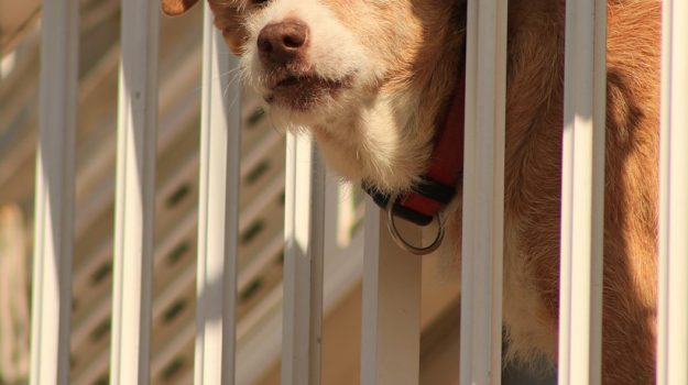 Cane abbandonato, maltrattamento animali, via Tortorelle, Agrigento, Cronaca