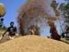 """Nave carica di grano al porto di Pozzallo. Corrao (M5S): """"Mercato siciliano cereali in ginocchio"""""""
