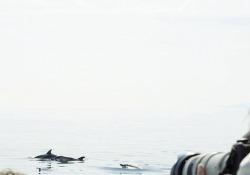La Fondazione Cima, con l'Università di Genova e la Regione Liguria, ha istituito un corso di whale watching per la formazione di esperti di avvistamento cetacei. L'attestato servirà per esercitare l'attività di guida all'interno del Santuario Pelagos, quell'area protet...