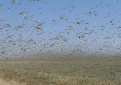 Milioni di locuste invadono la città in Arabia Saudita La città saudita di Najran, vicino al confine con lo Yemen, è stata invasa da un enorme sciame di locuste nei giorni scorsi - CorriereTV