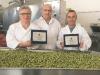 Castelvetrano, nell'azienda confiscata le olive da tavola più buone