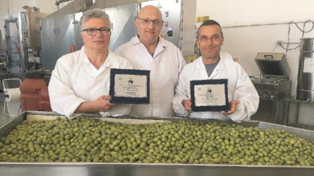 CASTELVETRANO, Monna oliva 2019, olive, Trapani, Mangiare e bere