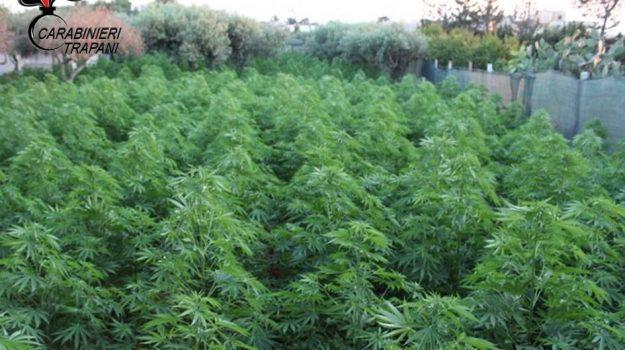 marijuana, marsala, Giovanni Umberto Valenza, Trapani, Cronaca