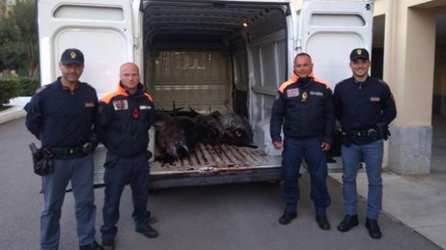 sequestro, tonno rosso, viale regione siciliana, Palermo, Cronaca