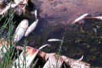 pesci_morti_saline_augusta
