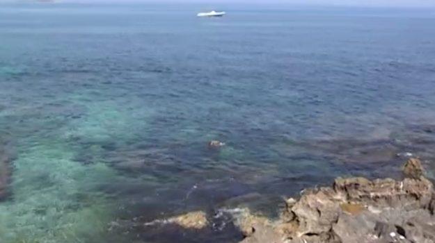 alga tossica, Palermo, Cronaca