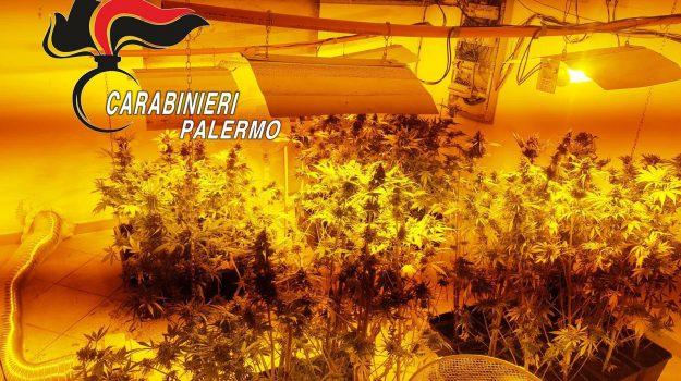 piano dell'occhio torretta, piantagione, Maria Cintura, Matteo Lo Bianco, Palermo, Cronaca