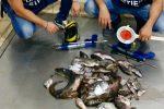 Siracusa, 2 sub sorpresi a pescare nell'area marina protetta del Plemmirio: multa da 2mila euro
