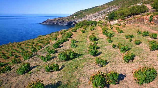 Pantelleria, Trapani, Economia