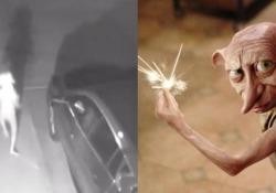 Il «Dobby» di Harry Potter esiste davvero? Una videocamera di sorveglianza negli Usa ha ripreso un'inquietante figura che cammina. E ognuno ha una sua teoria - CorriereTV