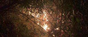 Incendi in Sicilia, dalla Regione 5 milioni per recuperare i boschi danneggiati