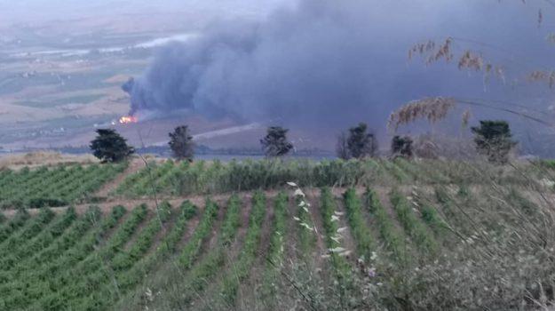 coldiretti, incendi, Sicilia, Sicilia, Economia