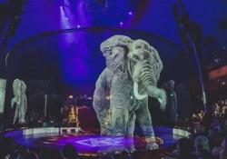 L'elefante? È un ologramma. Ecco il circo che ha detto basta allo sfruttamento degli animali  Si chiama Circo Roncalli e si esibisce principalmente in Germania e Austria. Ha sostituito gli animali con ologrammi a 360 gradi - CorriereTV