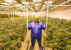 La nuova vita di Mike Tyson: venderà cannabis L'ex pugile aprirà un ranch per la produzione di cannabis in California - CorriereTV