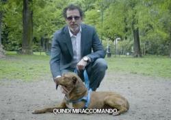 """«Niente cappottini, maglioncini o """"giargianate"""" colorate eh? Sei un cane e il tuo outfit te l'ha dato madre natura. Se ti devi sporcare le zampe te le sporchi!» È uno dei principi base che il Milanese Imbruttito spiega al suo nuovo cane. Lo fa nel video che sta circolando in questi..."""