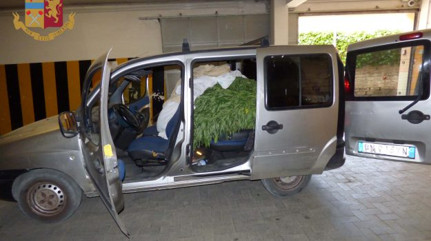 droga, piante di marijuana, Piazza Armerina, Gianluca Giuseppe Aguglia, Enna, Cronaca
