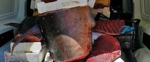 Palermo, sequestrata una tonnellata di pesce al mercato di Ballarò