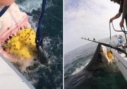 Un grande squalo bianco attacca la barca dei pescatori La scena catturata al largo del New Jersey, Usa, sembra uscita dal film «Lo squalo» - CorriereTV