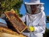 Miele, clima e import tagliano prime produzioni 2019 del 41%