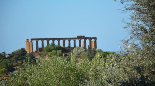 olio, Agrigento, Cronaca