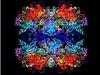 Struttura dell'enzima del lievito Pichia pastoris ricostruita grazie al microscopio crioelettronico (fonte: Janet Vonck et al (2016) PLoS ONE)