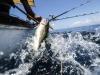 Cala la richiesta di pescato, operatori fermi in porto a Sciacca
