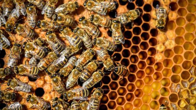 apicoltura, Sicilia, Economia