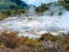 Una sorgente geotermale. probabilmente erano simili a questi gli ambienti in cui ha avuto origine la vita (fonte: Michael Bower, Pexels)
