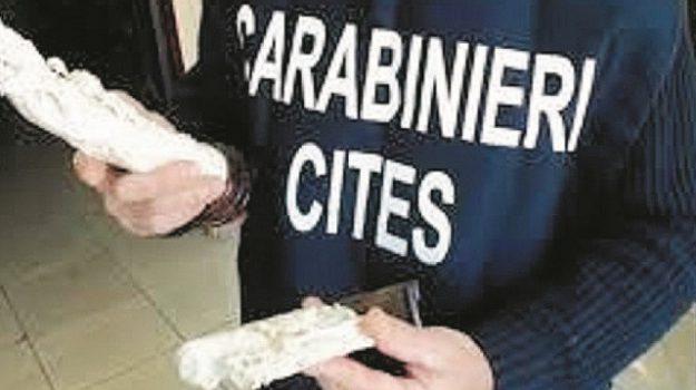 avorio, carabinieri, Siracusa, Cronaca