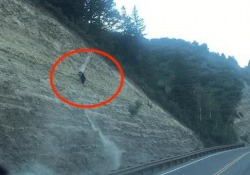 Ce la farà oppure no? L'orso nero scala la parete rocciosa Il video catturato da un automobilista vicino ad una strada a Edwards, in Colorado - CorriereTV
