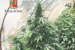 Scoperta piantagione di droga a Siracusa, continuano i controlli sulle strade