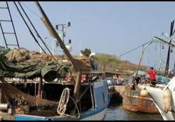 I pescatori: «Dove lo scarichiamo noi il pesce? Guardate come siamo ridotti»  - Corriere Tv