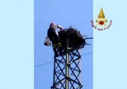 Piombino: falchi nidificano su un traliccio di 15 metri: il salvataggio dei Vigili del Fuoco La scoperta del WWF a Piombino - Ansa