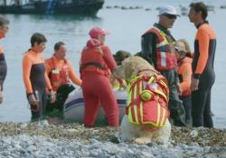 «Superpower dogs», il coraggio e la forza di Reef   - Corriere Tv