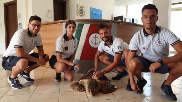 animali, Messina, Cronaca