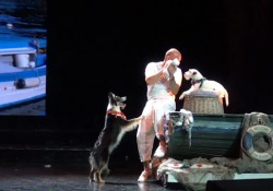 Hurricane, Flora e Happy. Una border collie, una parson russell e una chihuahua. Sono loro le protagoniste di «All you need is…Wooff!», il primo spettacolo che ha per protagonisti dei cani, realizzato da Adrian Stoica, dog Trainer esperto in «divertimento del cane e con il cane», campione mon...
